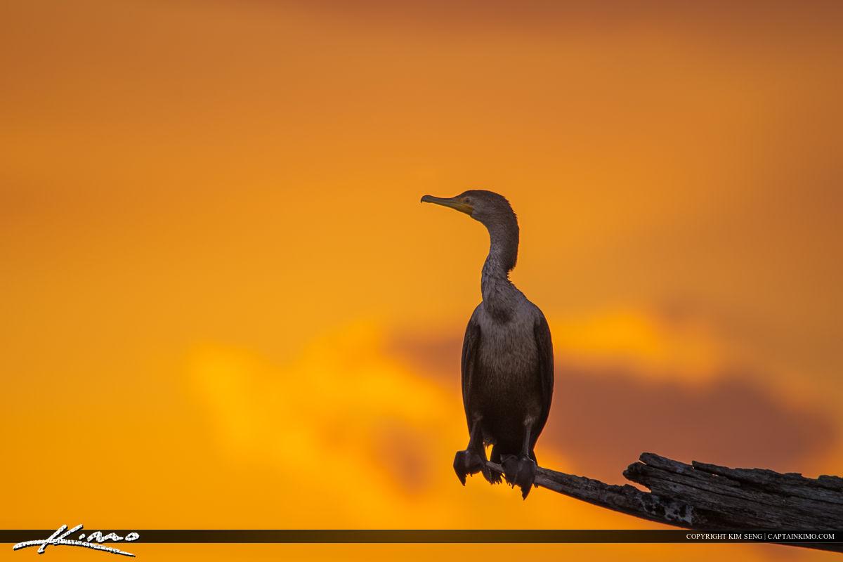 Peaceful Waters Sanctuary Wellington Florida Cormorant Bird