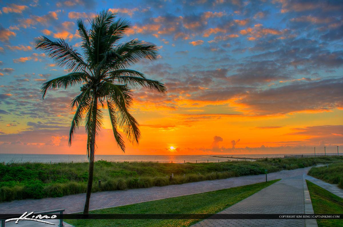 South Beach Miami Coconut Tree at Park