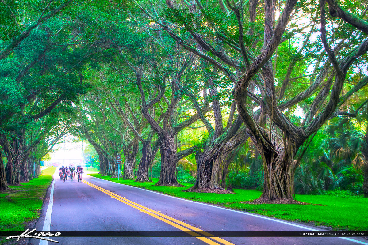 Riding Bicycle On Road Under Banyan Tree