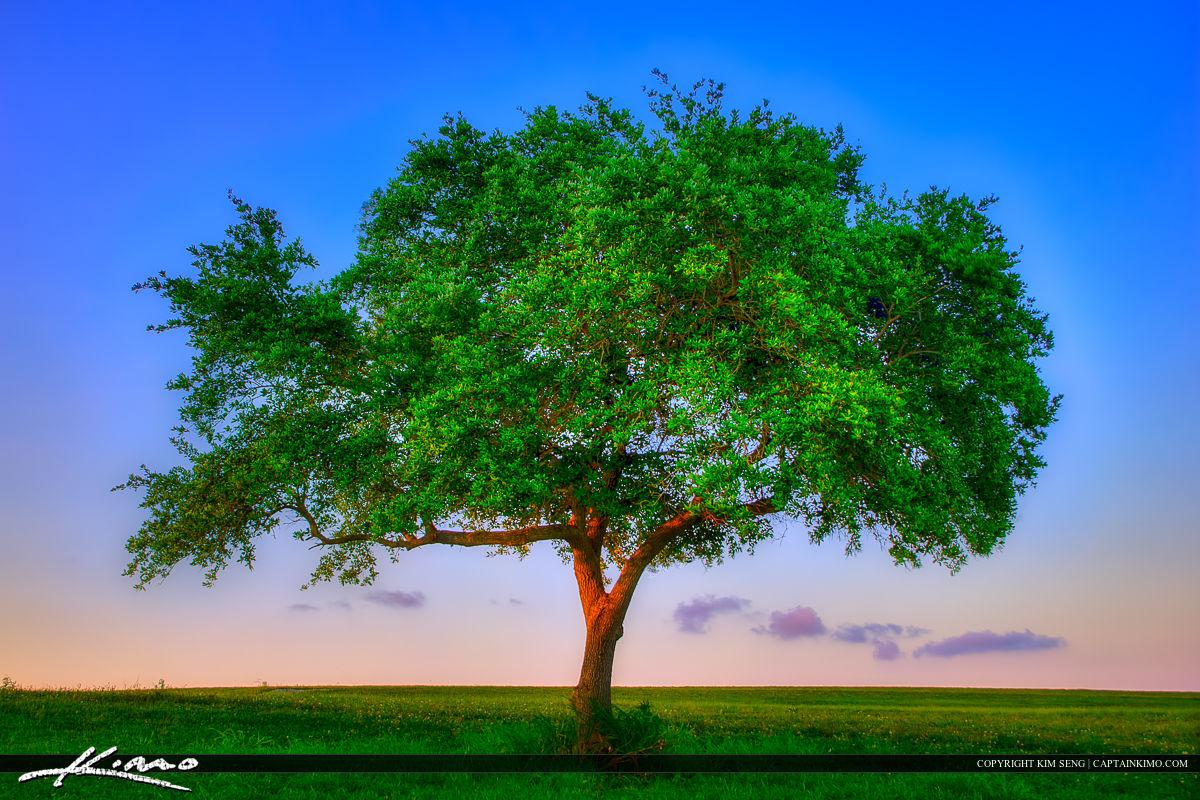 Dyer Park Sunset Lone Tree Palm Beach County