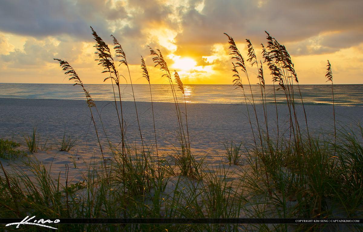 Sunrise Singer Island Beach Florida Seaoats