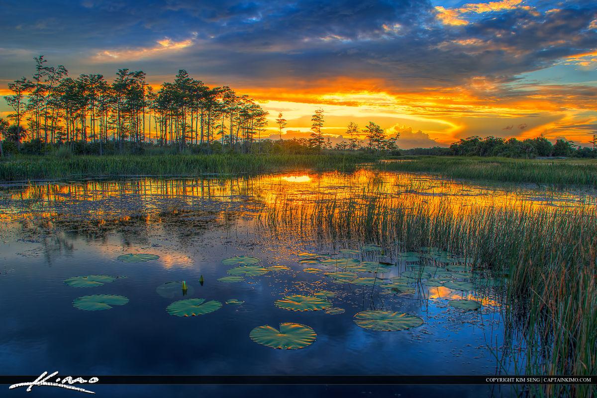 Florida Wetlands Sunset River of Grass