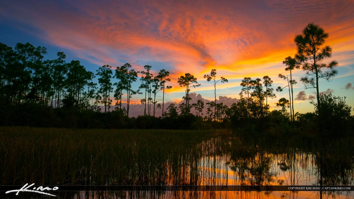 Florida Sunset Pine Forest Wetlands Wide