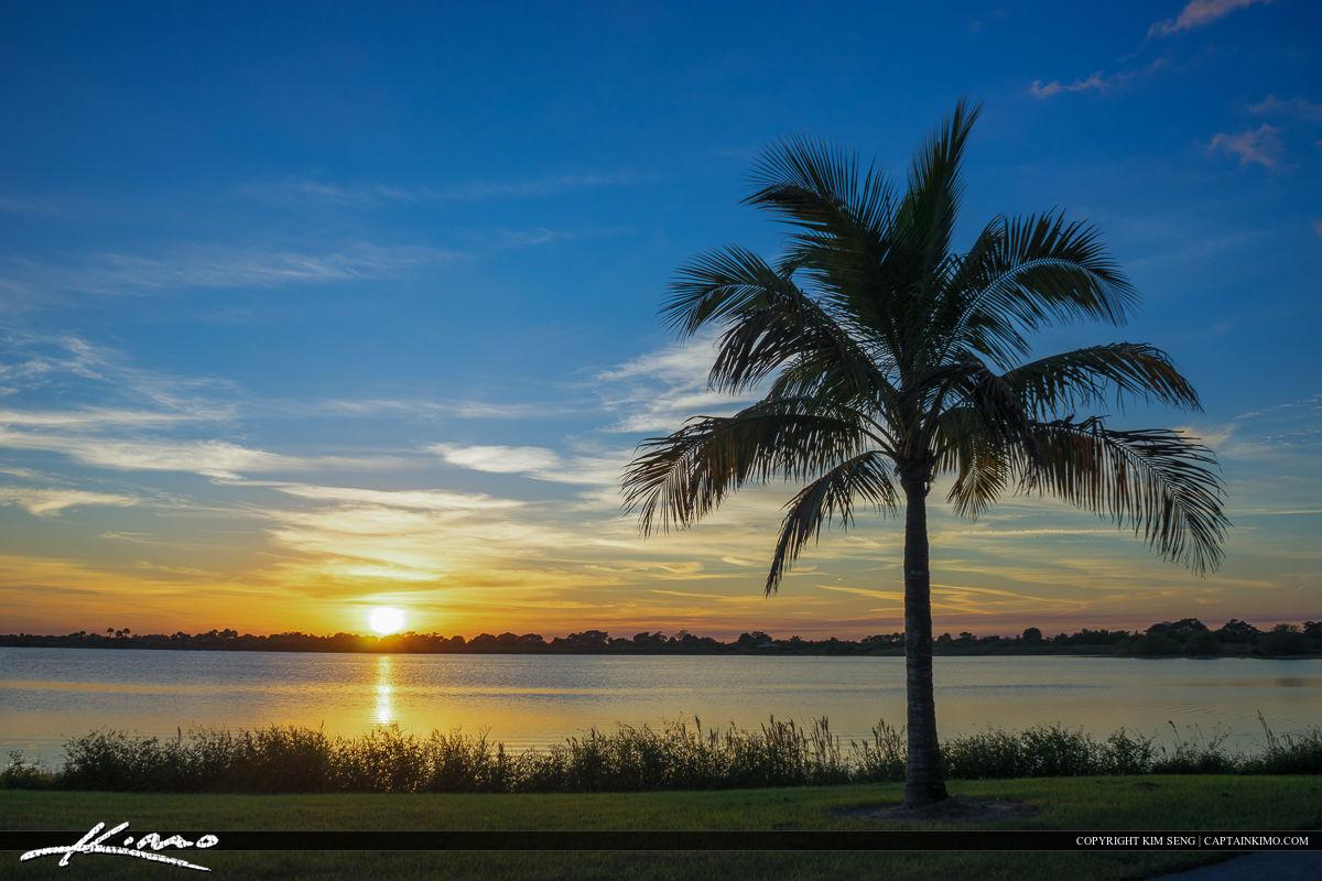Coconut Tree at Lake in Boca Raton Florida Park