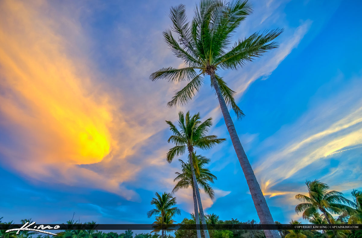 Coconut Palm Tree Beautiful Florida Sky
