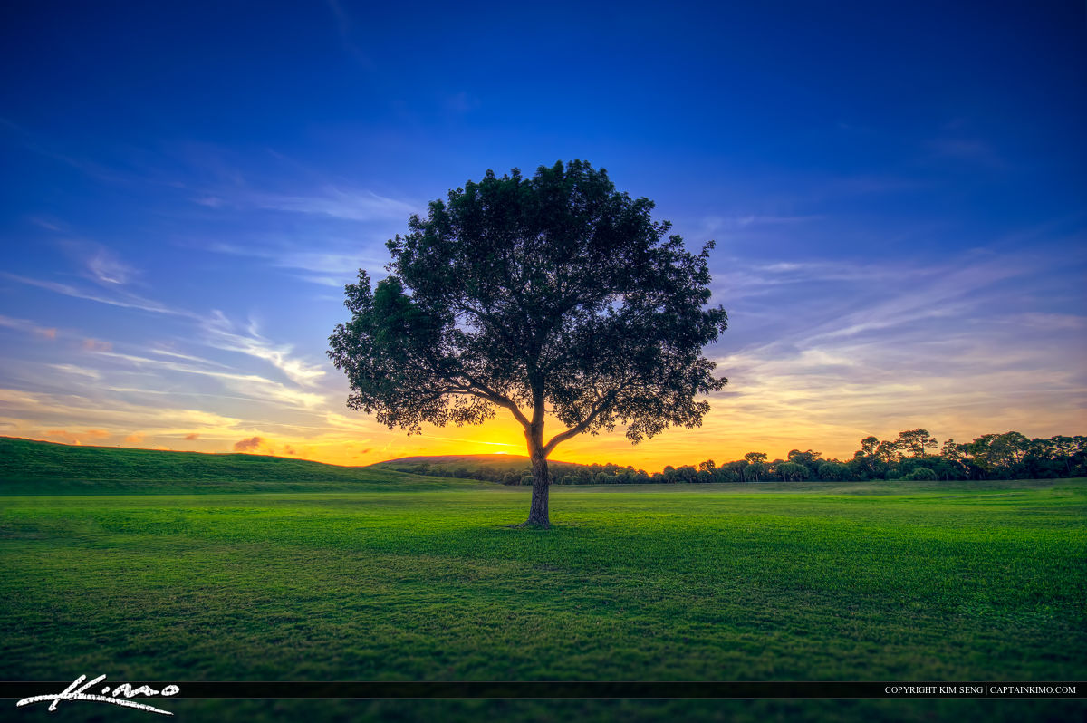 Lone Tree On Field of Green Grass Sunset