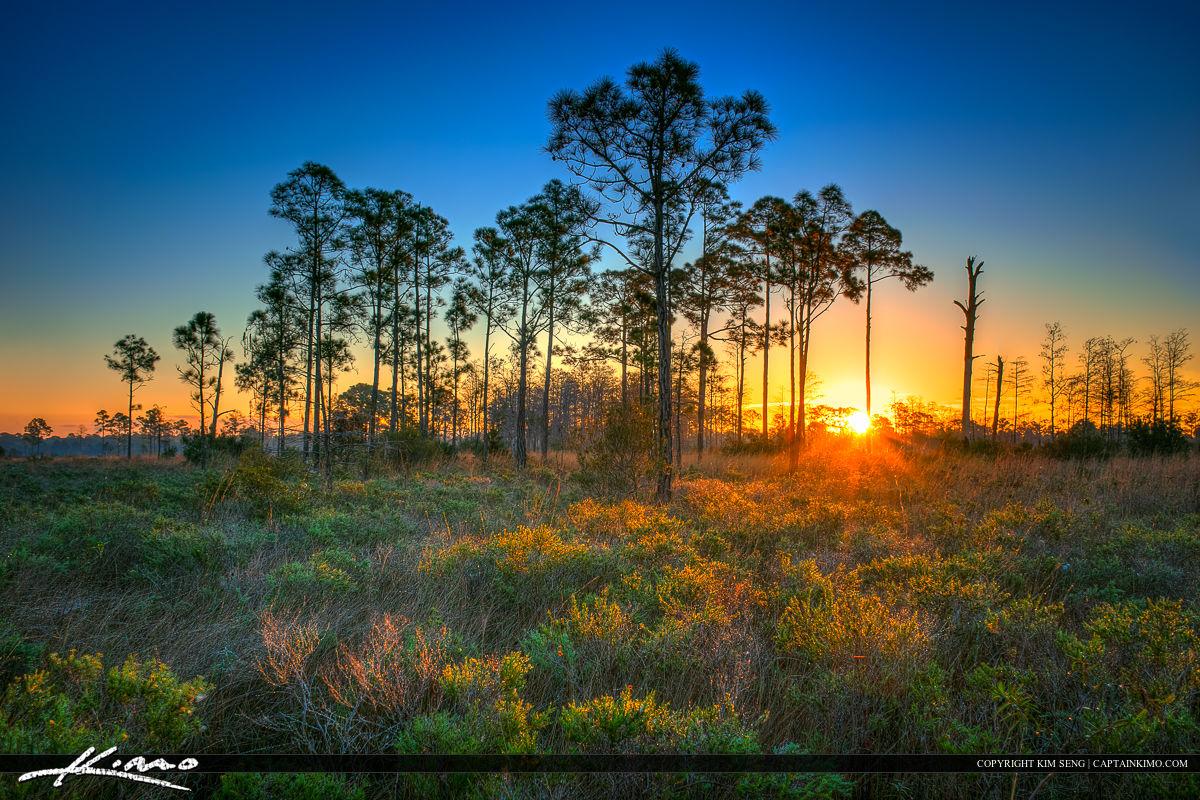 Pine Glades Sunrise Over Wood Lands