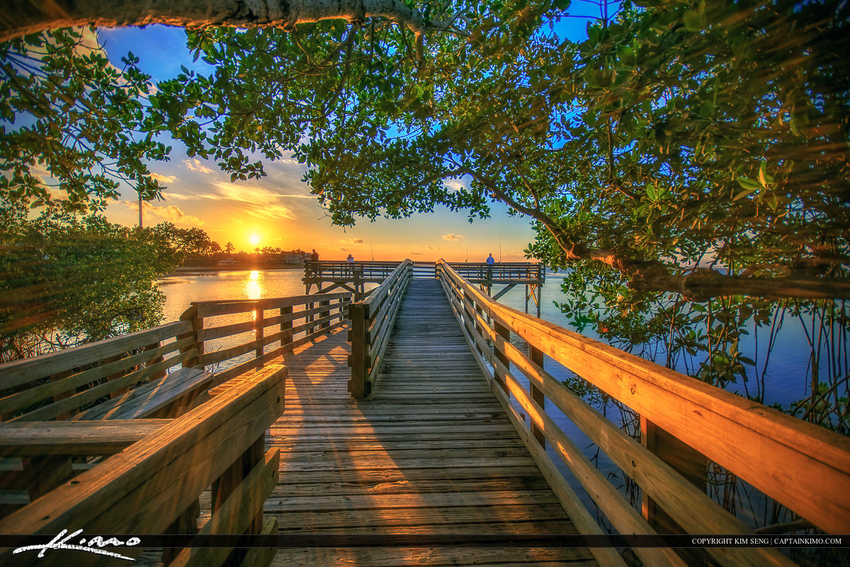 Stuart Florida Sunset Boardwalk Under Mangrove Tree