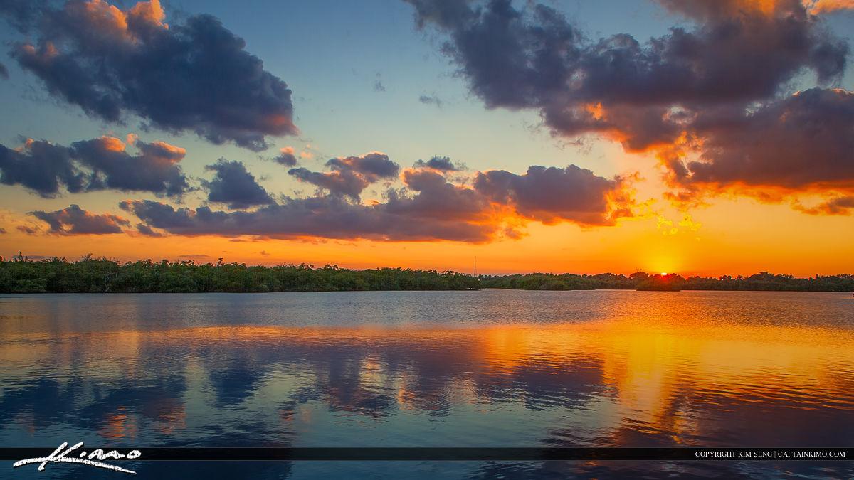 Mangrove Tree Sunset MacArthur Park Lake Worth Lagoon