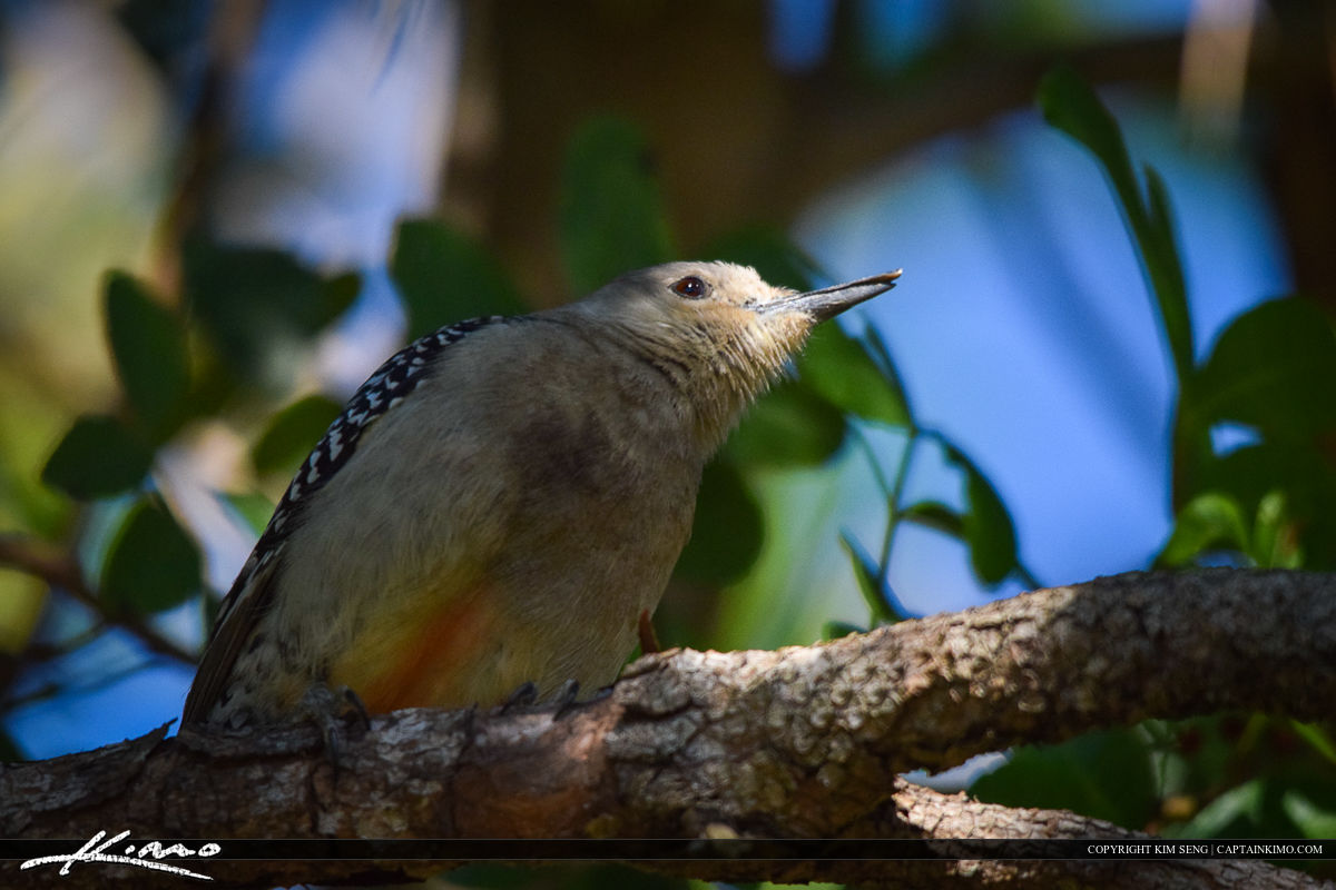 Woodpecker Perched Bird Photography