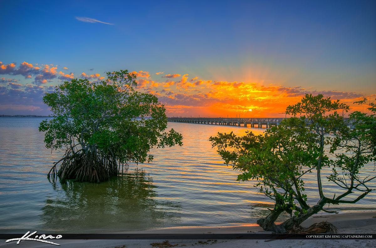 Indian Riverside Park Sunrise Mangrove Trees