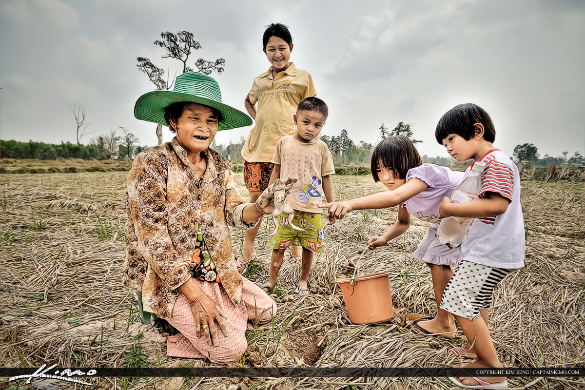 Grandma Hunting Frogs with the Kids in Thailand Rice Fields