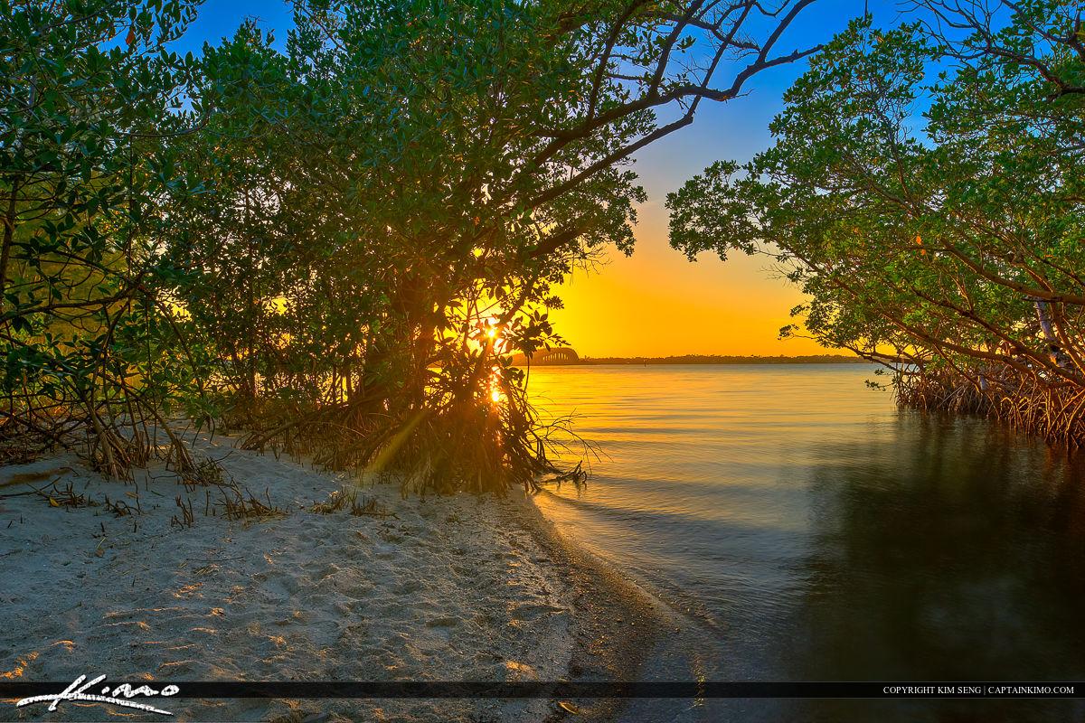 Jensen Beach Florida Sunset Mangrove Canopy