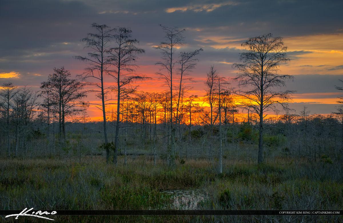 Florida Sunset Over Wetlands During Winter Bald Cypress Tress