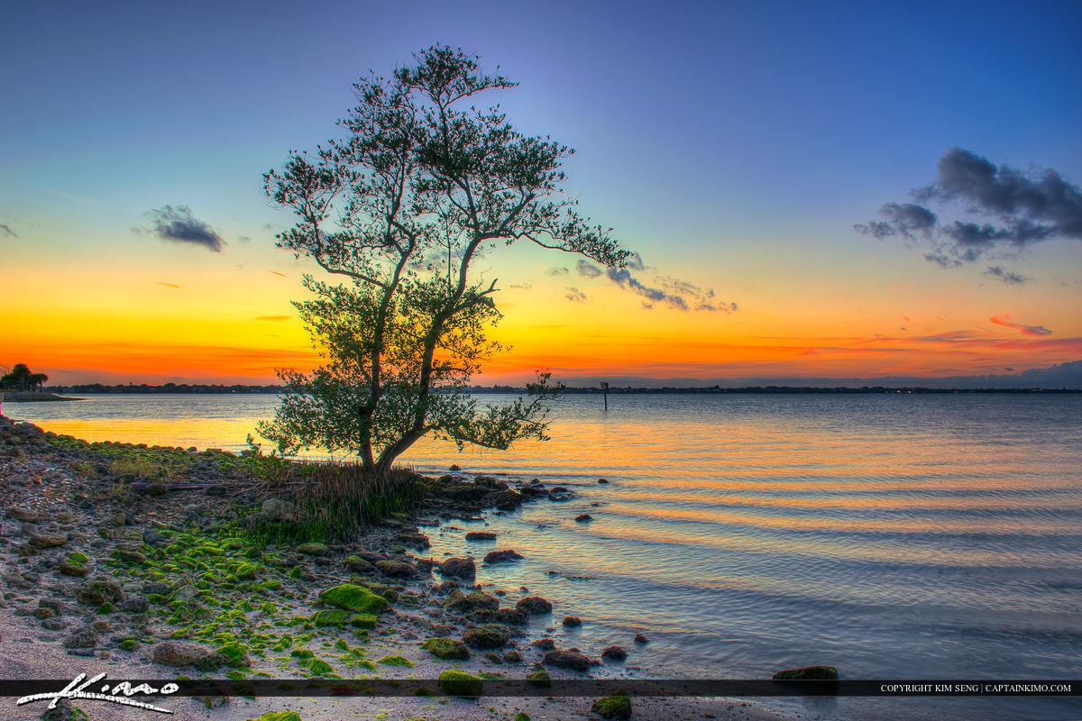 Stuart Florida Okeechobee Waterway Mangrove at Park