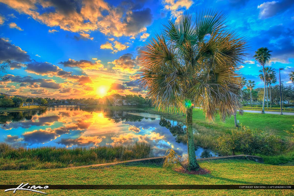 Sunrise Palm Beach Gardens Lake Palm Tree