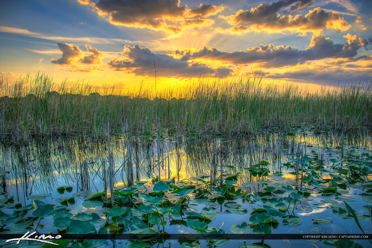 St Cloud Florida Sunset Lakefront Park Lilypads East Lake Toho