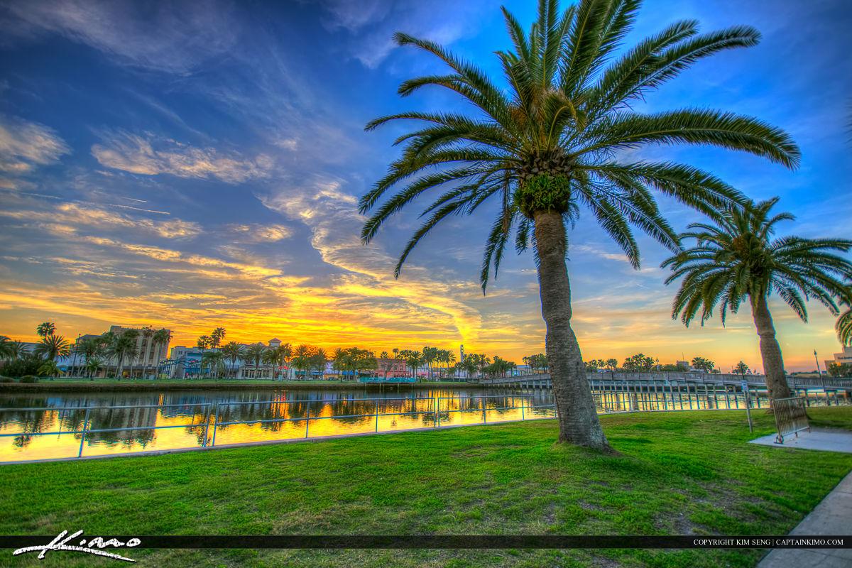 Daytona Beach Florida Palm Tree Library