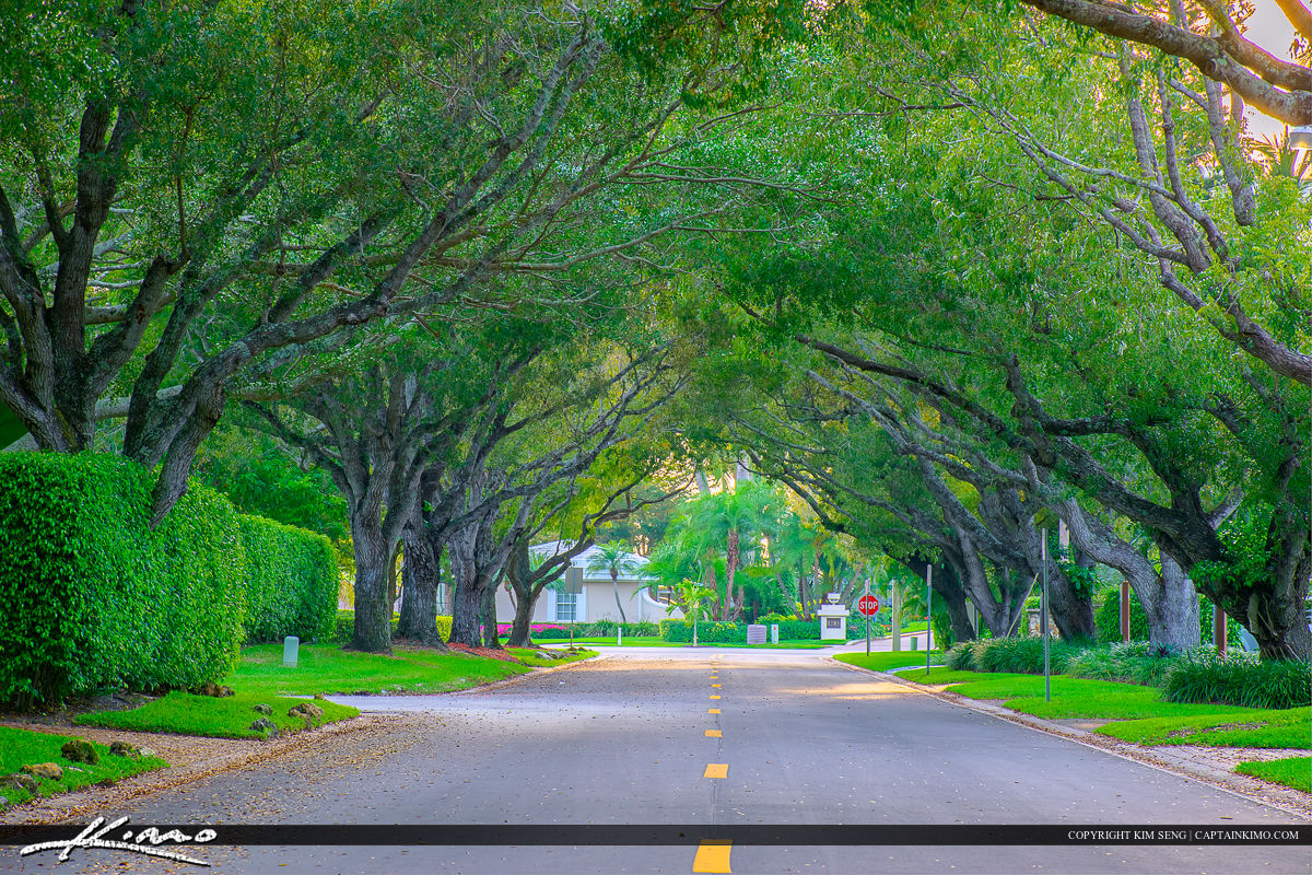 Naples Florida Along the Road with Trees