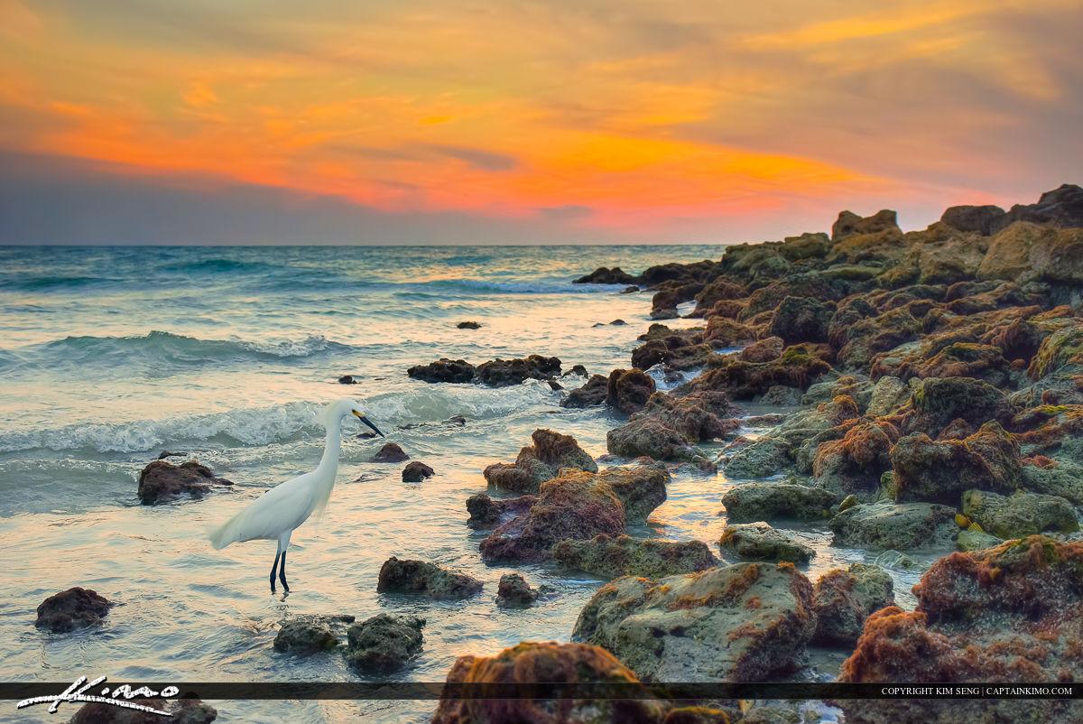 Naples Florida White Bird Egret along Inlet