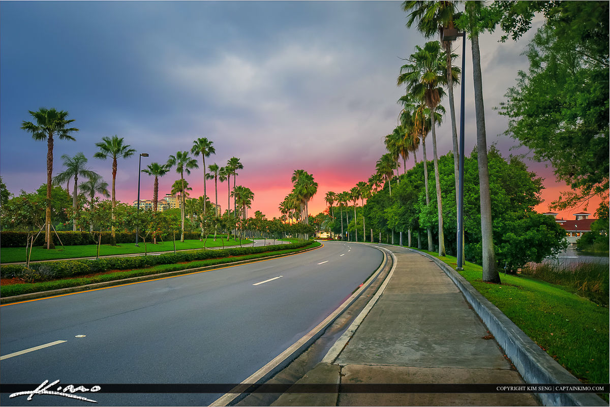 Palm Beach Gardens Road with Coconut Trees