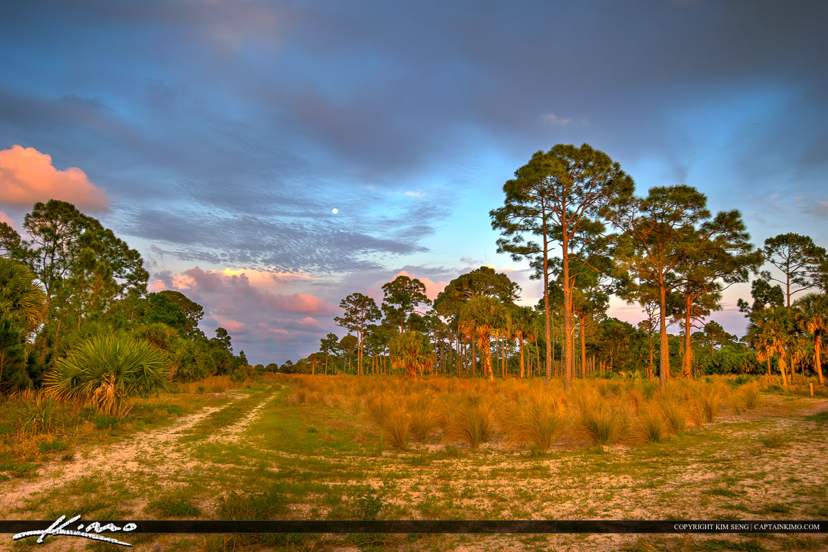 Winding Waters Sunset Moonrise Pine Forest