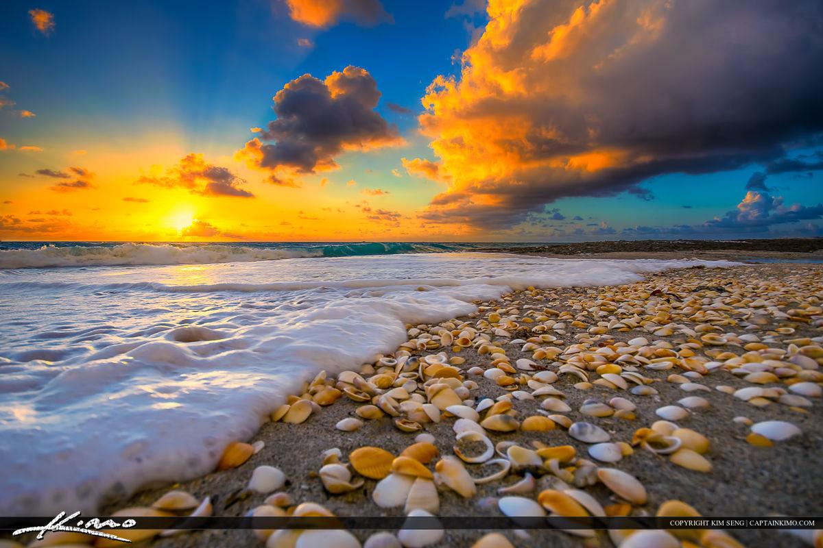 Shells on Beach During Florida Sunrise