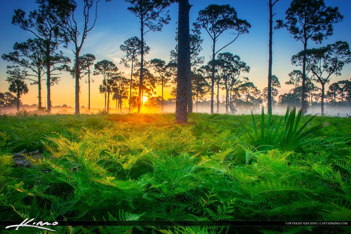 Beautiful Foggy Morning Sunrise Florida Landscape