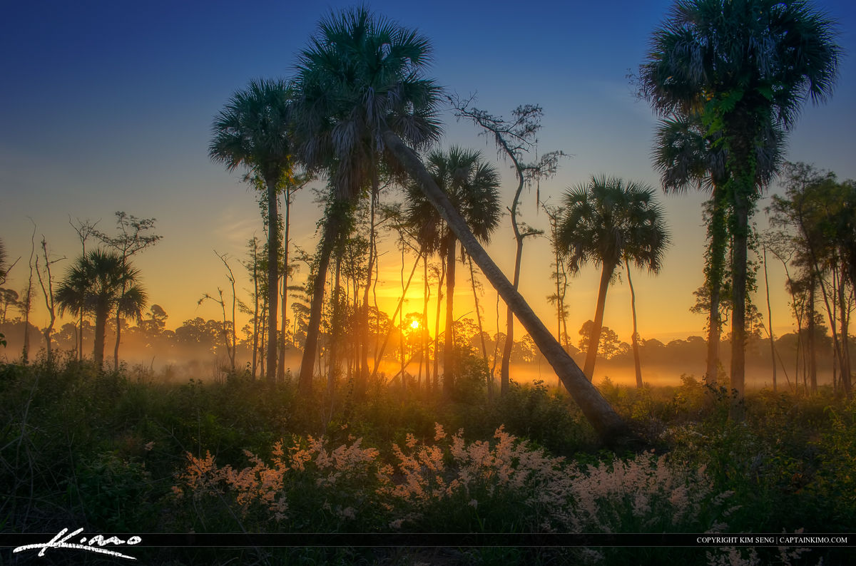 Natural Florida Landscape Foggy Morning Sunrise
