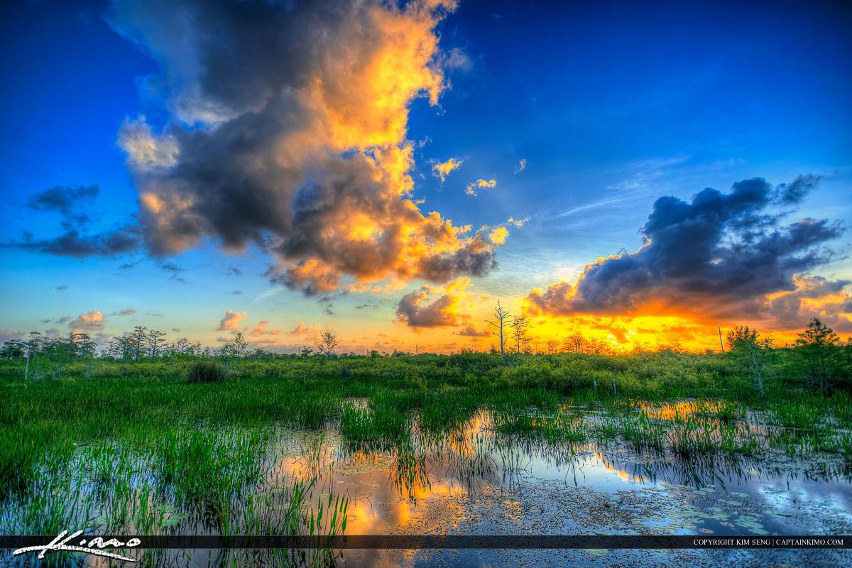 Wetlands at Sandhill Crane Park During Sunrise Wide