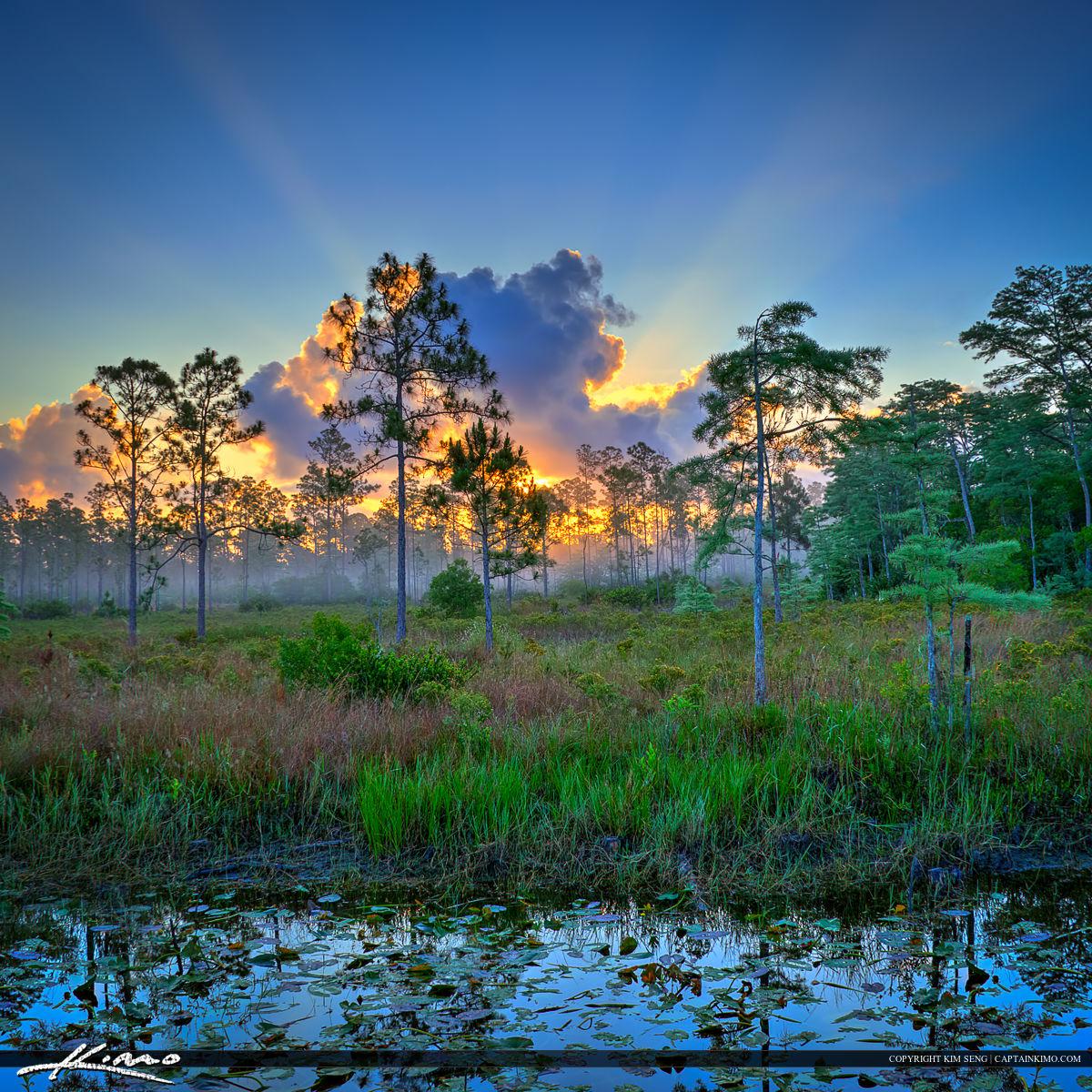 Cypress Creek Natural Area Sunrise Over Jupiter Florida