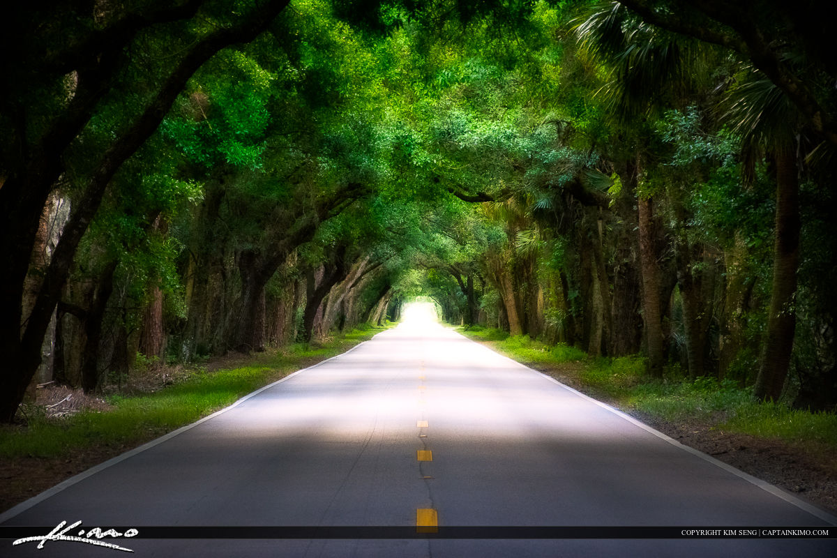 Martin Highway Oak Tree Canopy Road HWY 714 Martin County