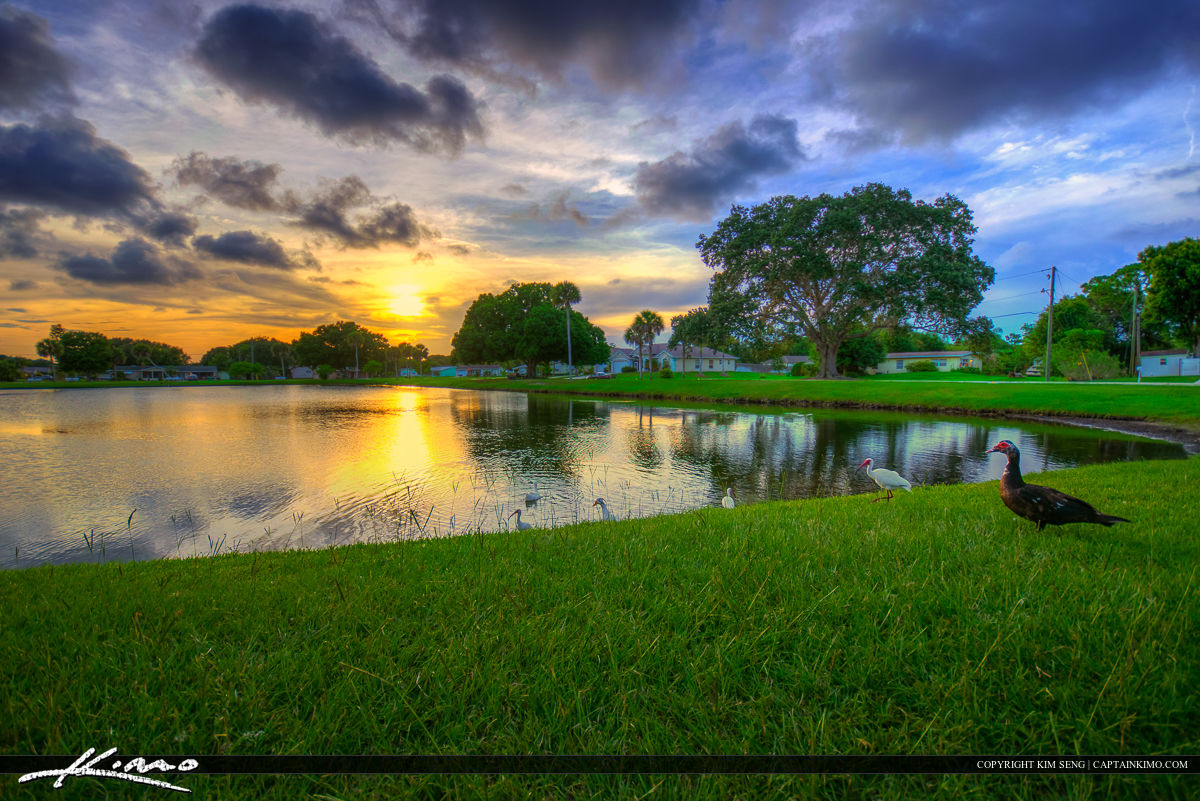 Sebastian Florida Photos Ibis and Duck Easy Street Park Lake