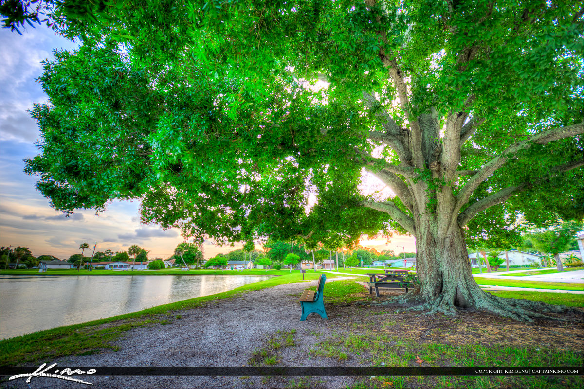 Sebastian Florida Photos Oak Tree Easy Street Park