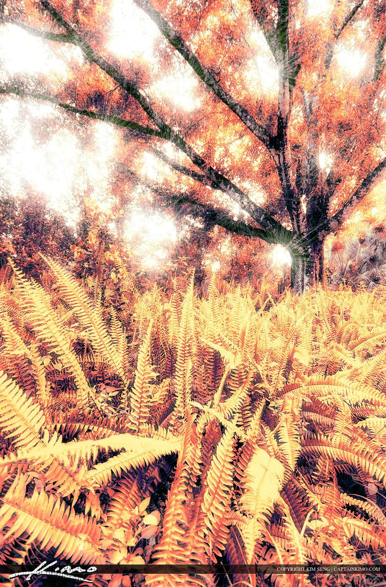 Fern Forest Tree Photo Art