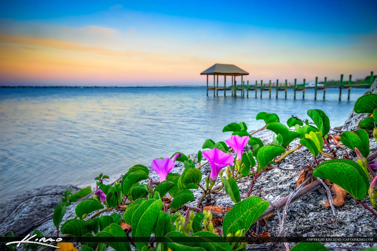 House of Refuge Pier at Waterway Pink Flowers Stuart, FL
