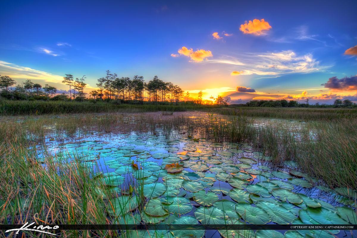 Sunset Wetlands Florida Landscape Palm Beach Gardens