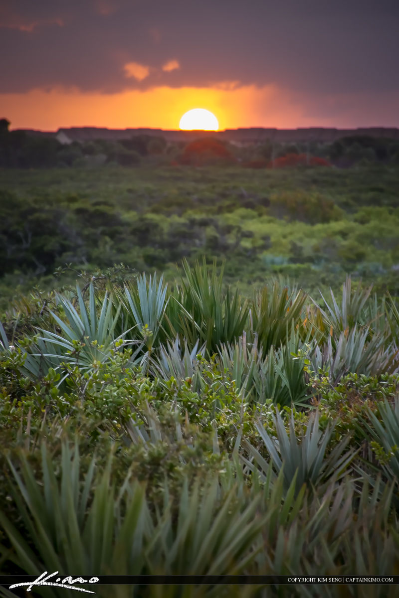 Juno Beach Dunes Sunset Palmetto Palms