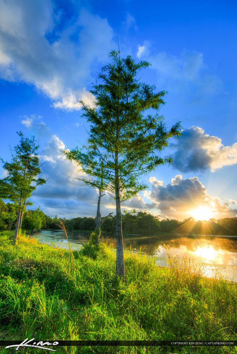 Cypress Tree at Lake in Riverbend Florida