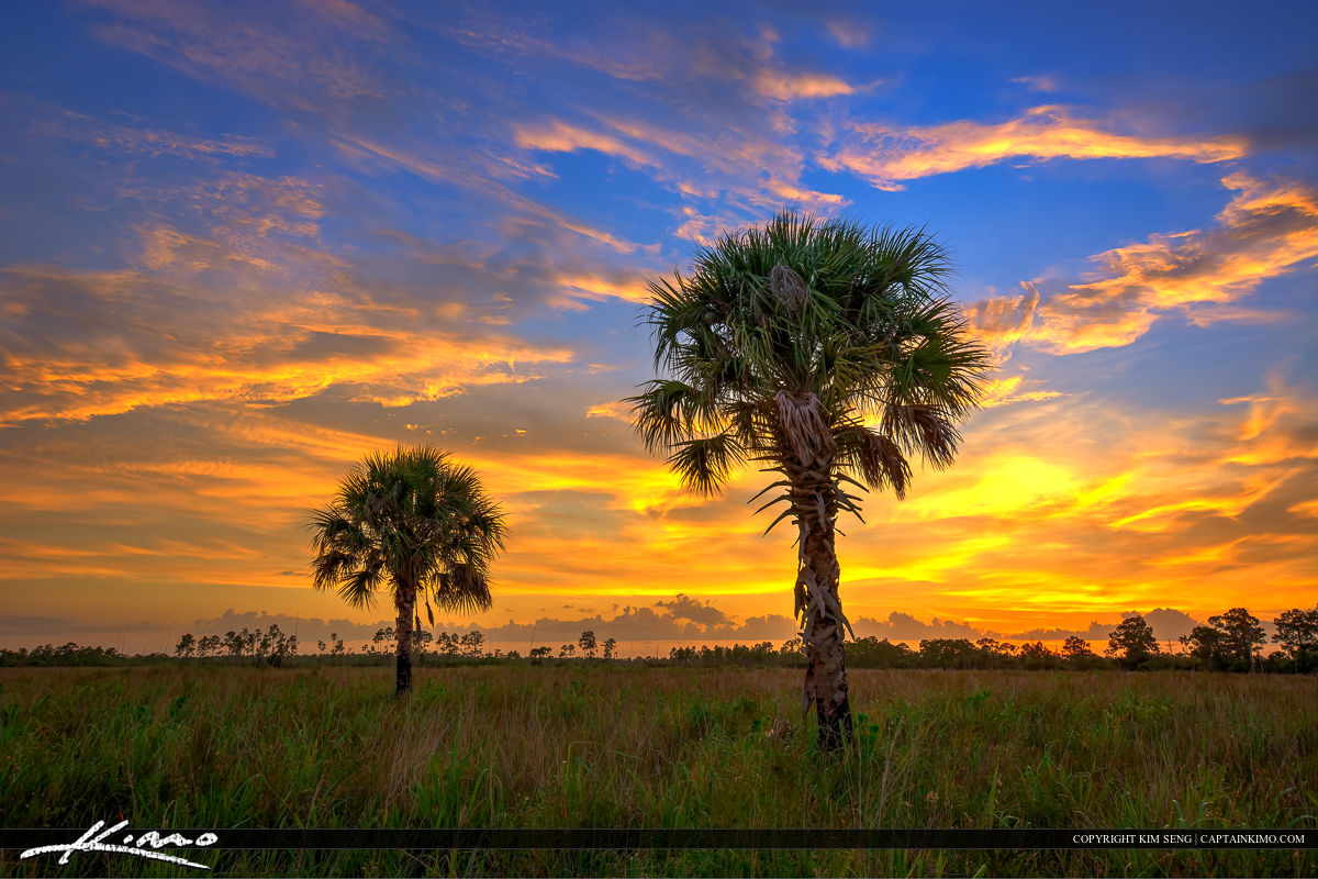 Florida Landscape HDR Photo Pine Glades Natural Area