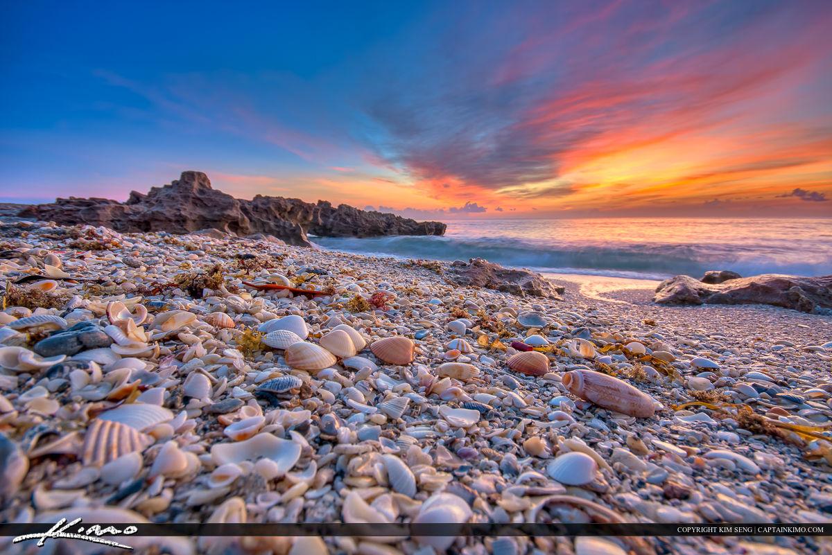 Seashells at Jupiter Island Beach Sunrise Over Ocean
