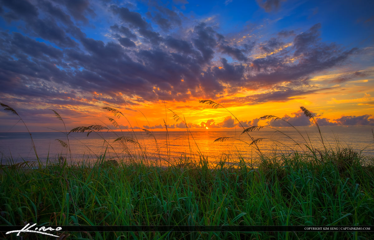 Seaoats at Sunrise from Coral Cove Park along the Beach on Jupit