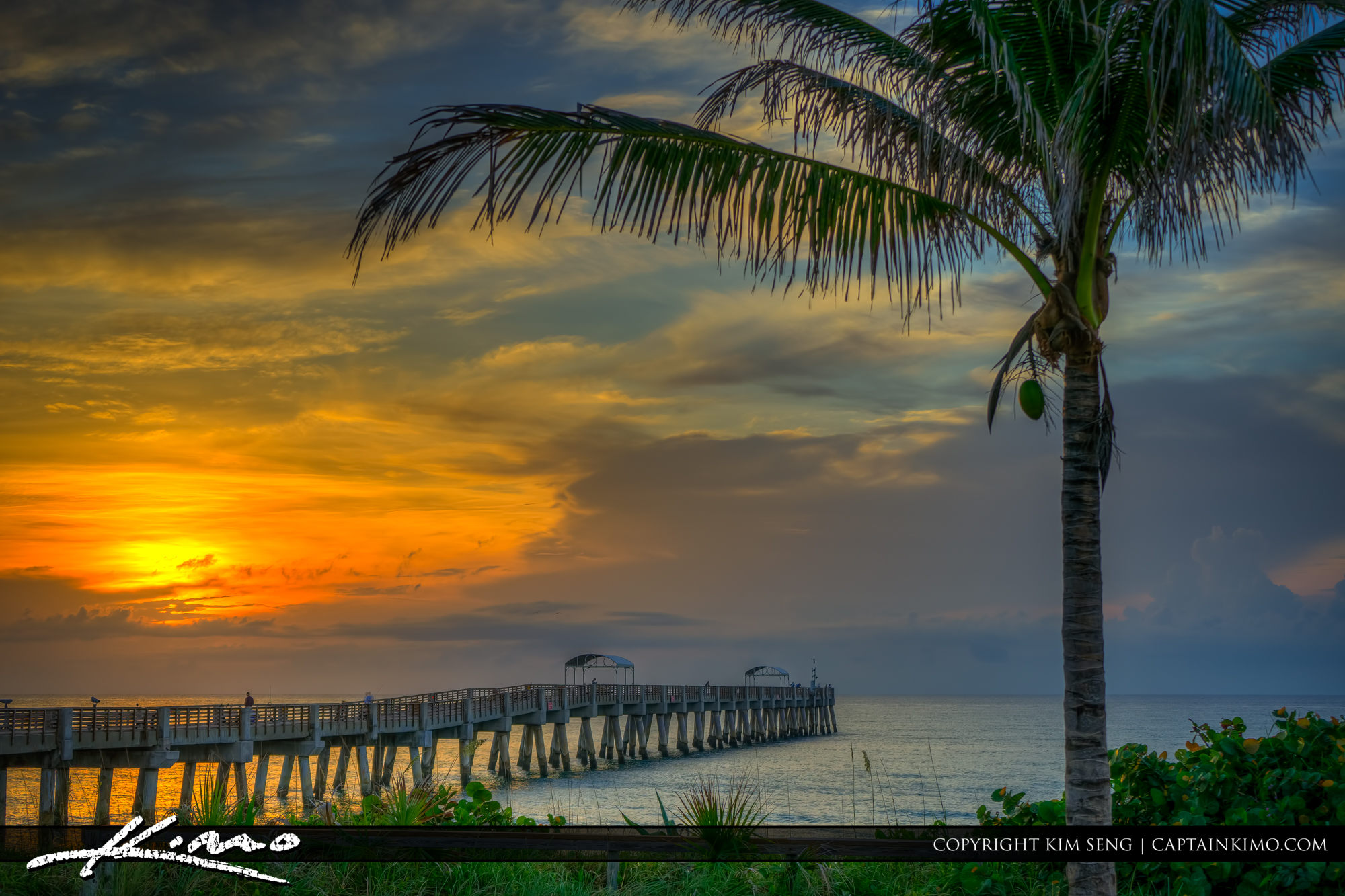 Coconut Tree at Sunrise from Lake Worth Beach Pier