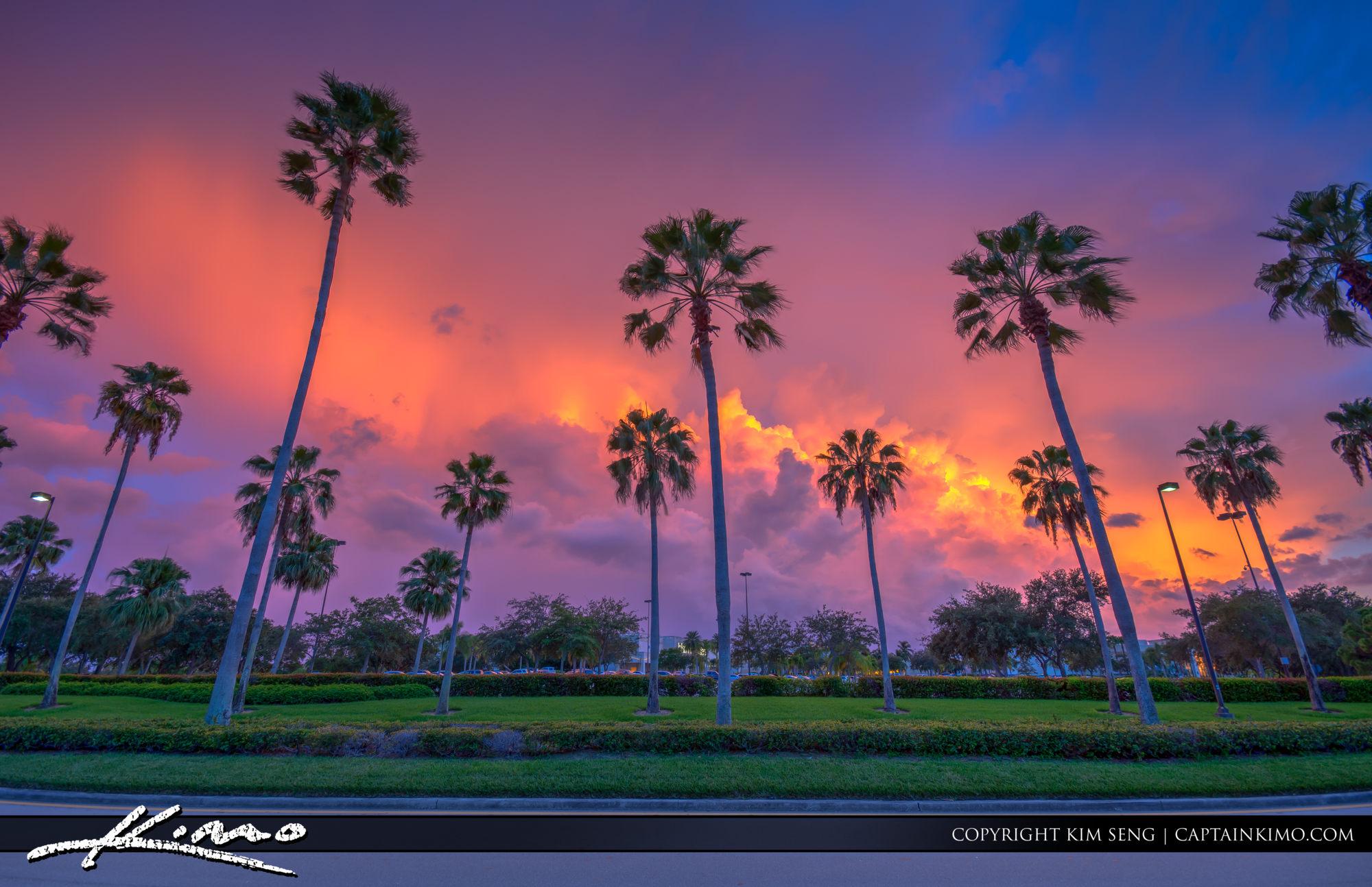 Gardens Mall Road with Palm Trees PBG Florida