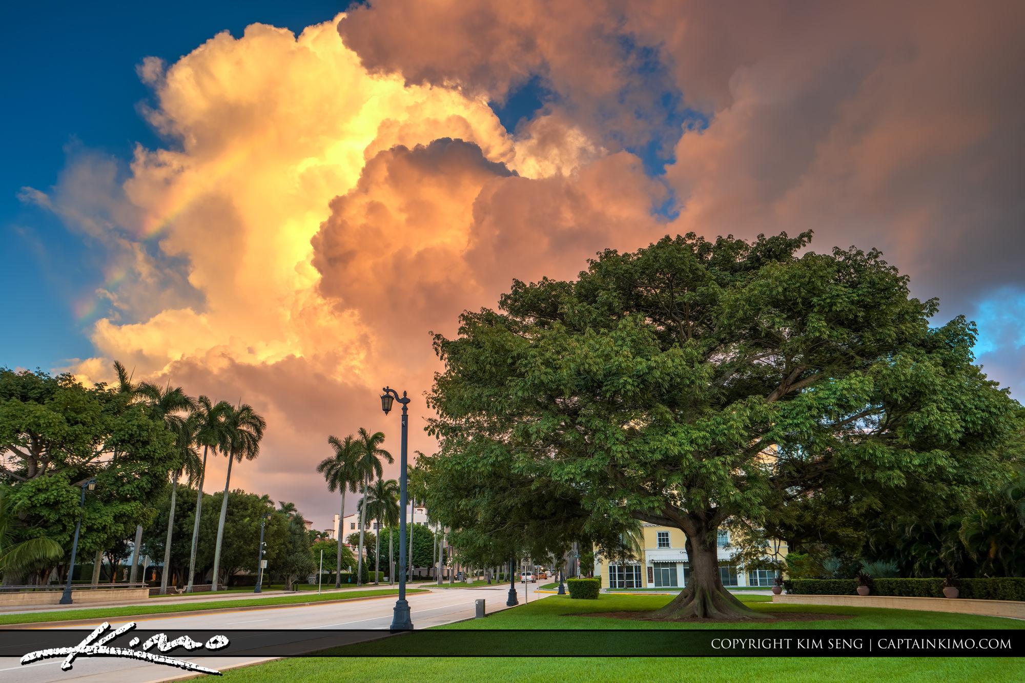 Kapok Tree Palm Beach Island Florida