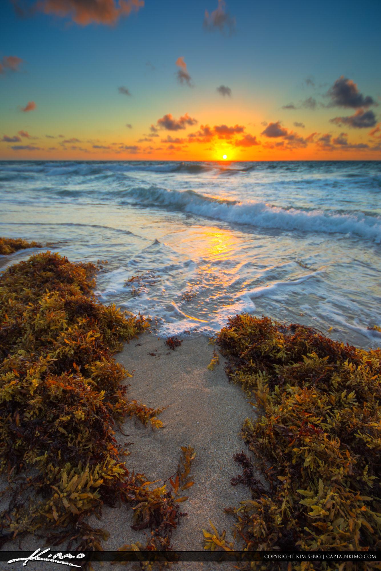 Lauderdale by the Sea Seaweed at Beach
