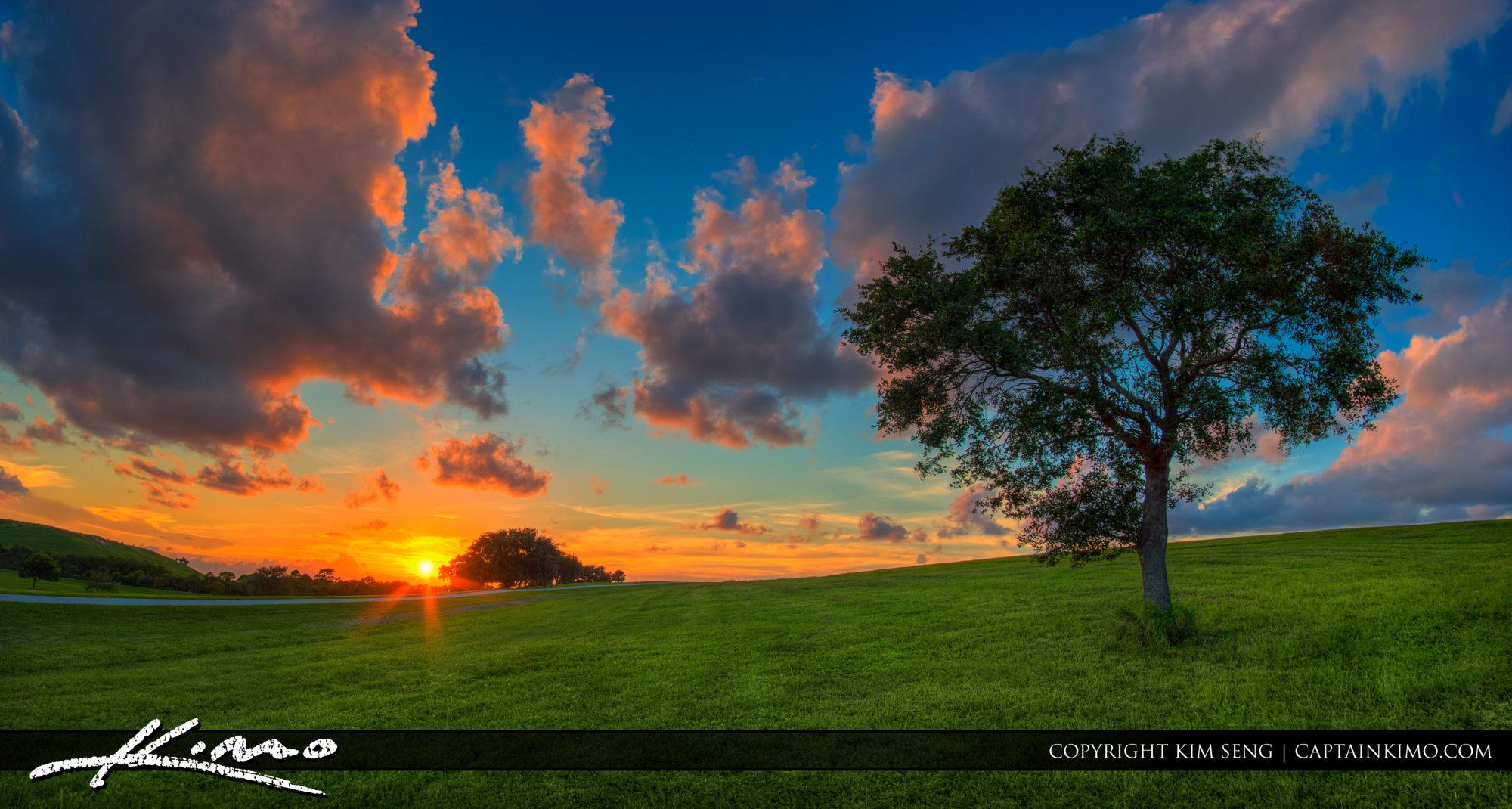 Lone Tree on Green Grassy Hill West Palm Beach Florida
