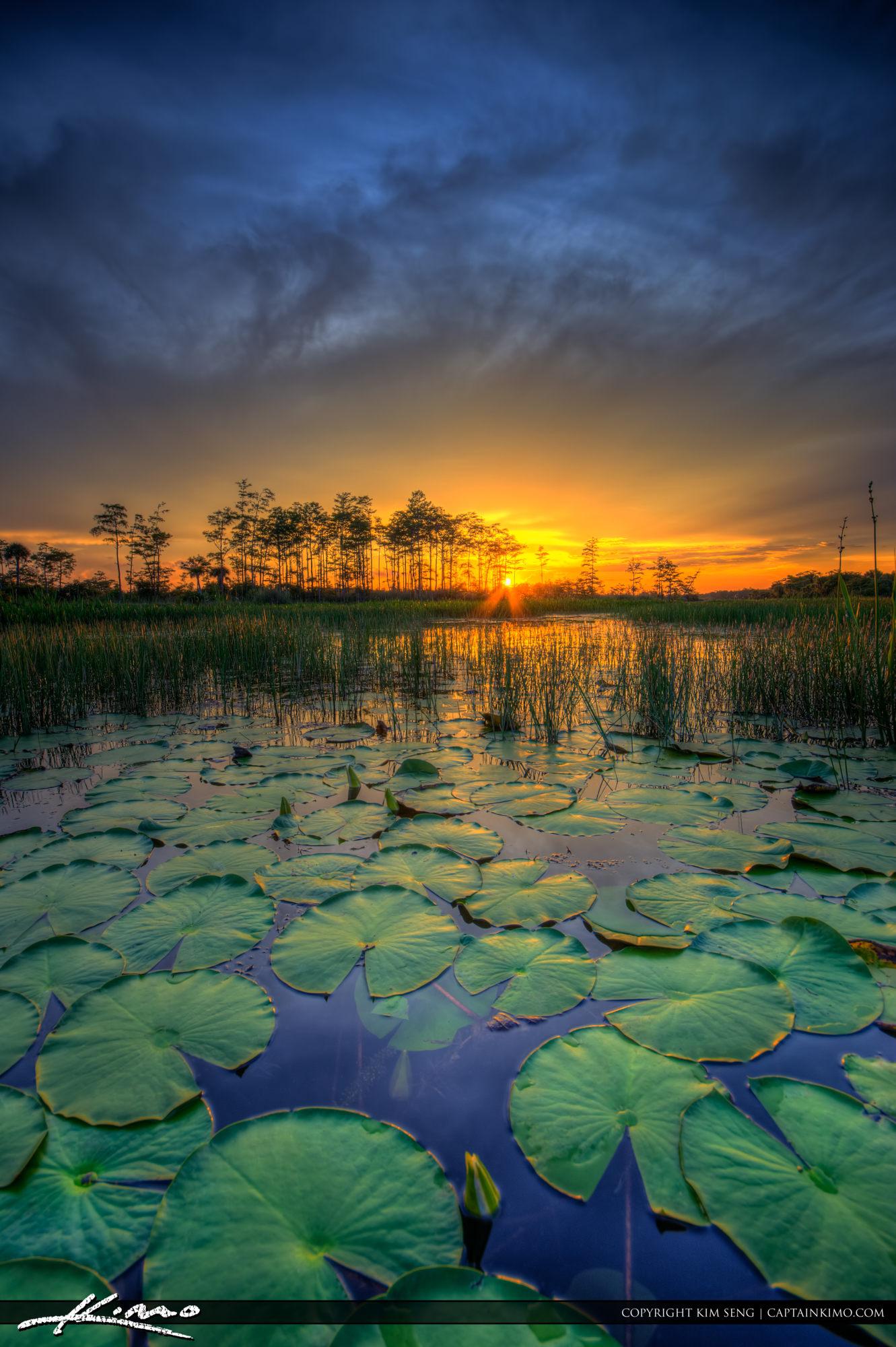 Loxahatchee Slough Natural Area Sunet Wetlands Lilypads
