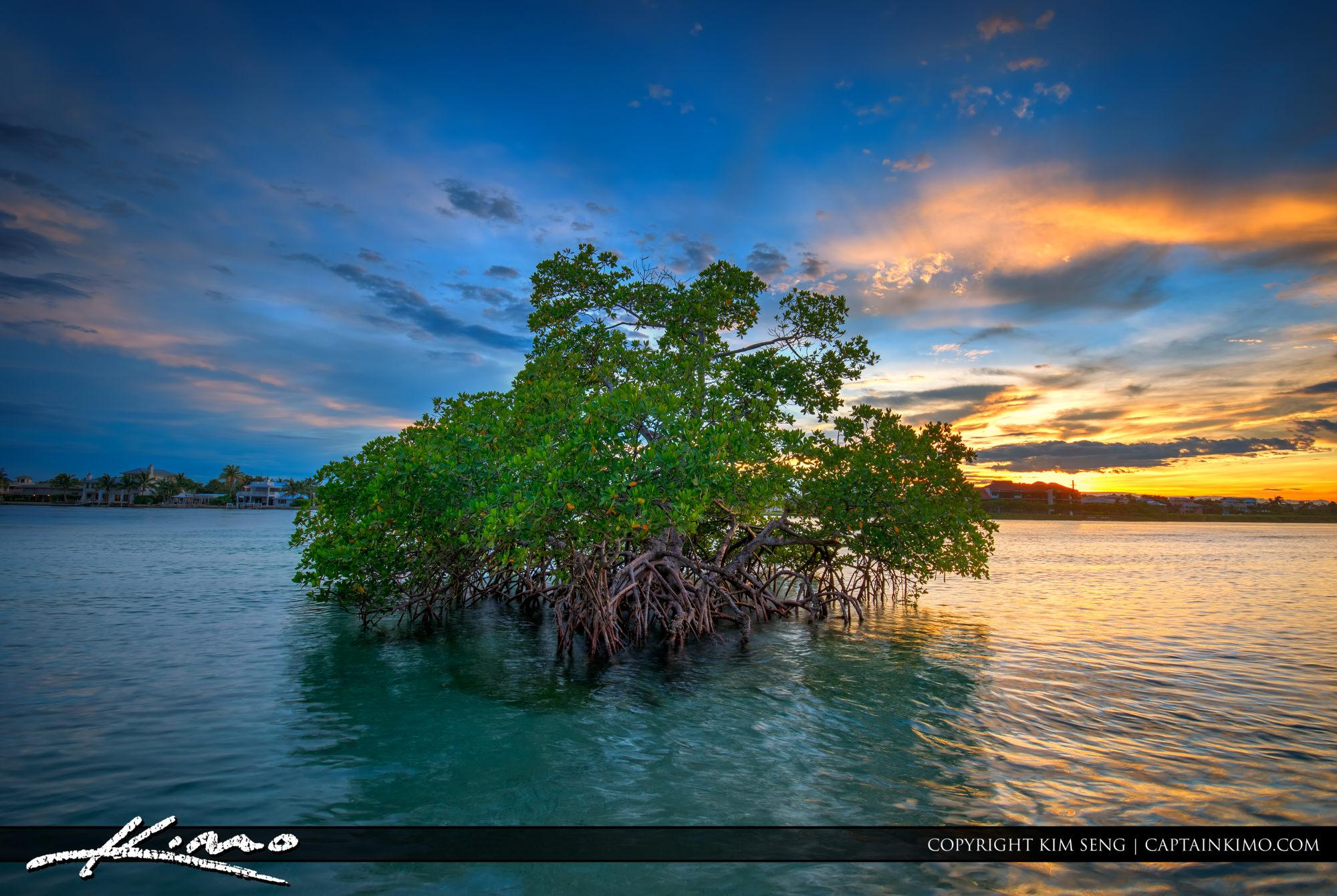 Mangrove Sunset at Jupiter Island Florida