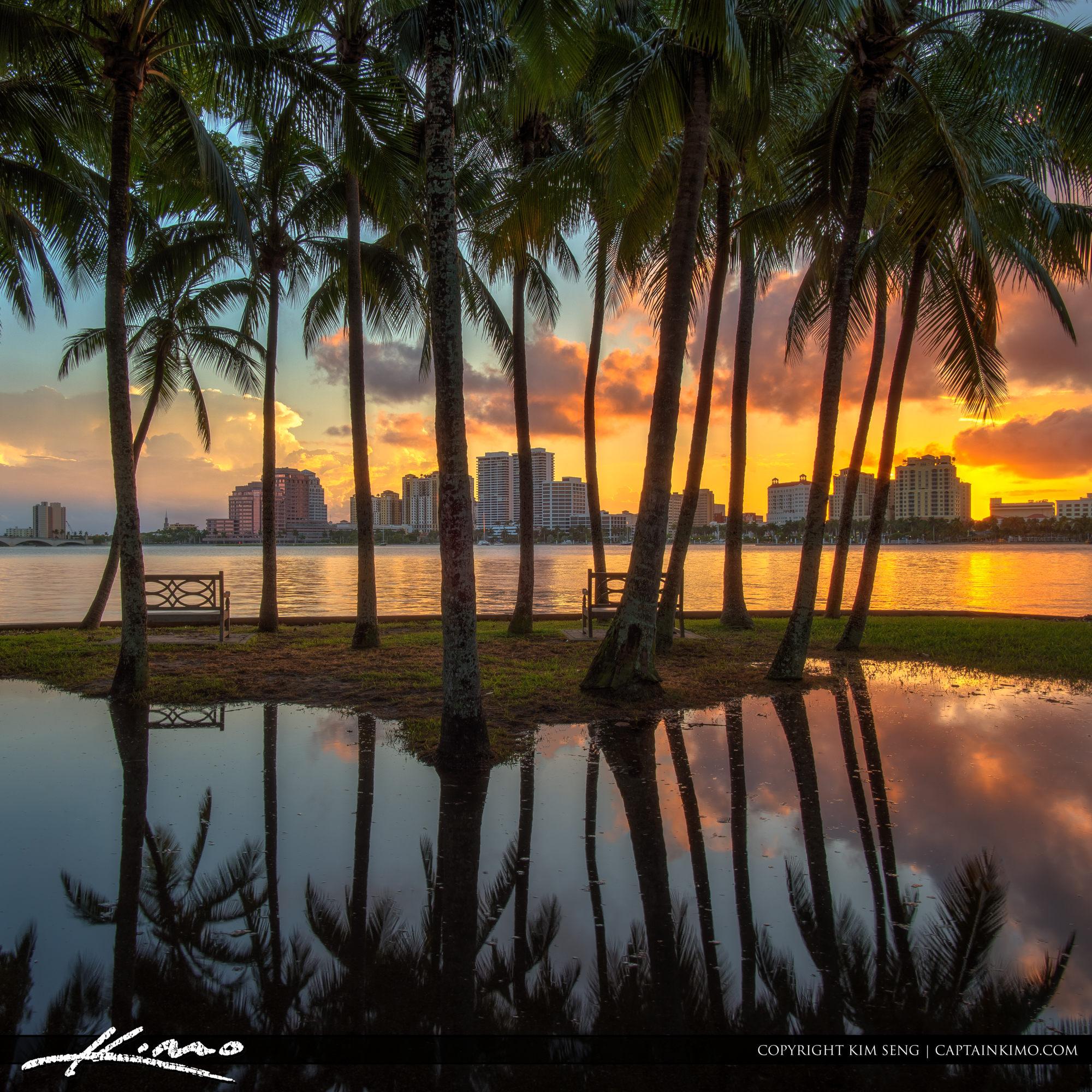 Palm Beach Island Coconut Tree Reflection